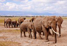 Kenya Safari FAM
