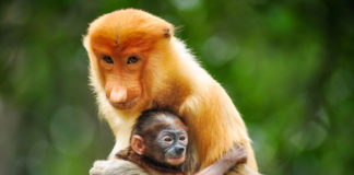 Wildlife Borneo