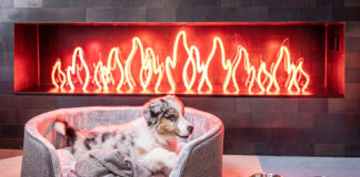 Bring your furry friends along for a vacation at Ovolo Hotels.