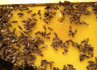 Hyatt Regency Tamaya Resort's bees