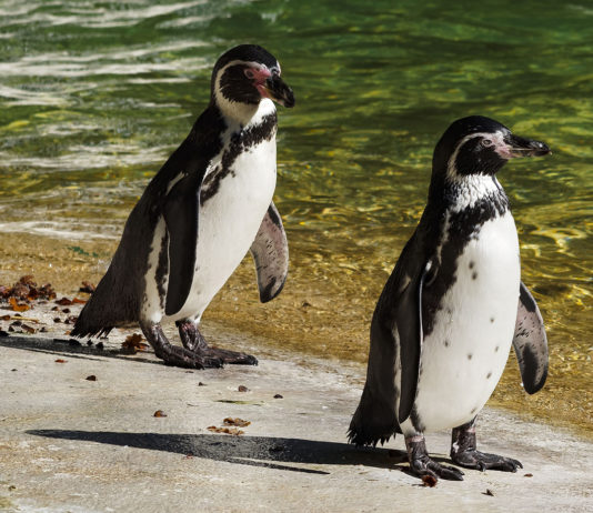 Visit the country's famous penguins.