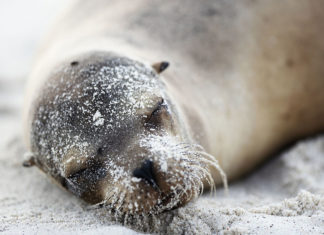 Silversea Fund helping the Galapagos Islands
