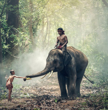 Myanmar FAM